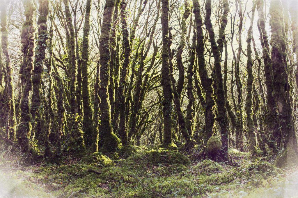 Imbolc Brigia forêt
