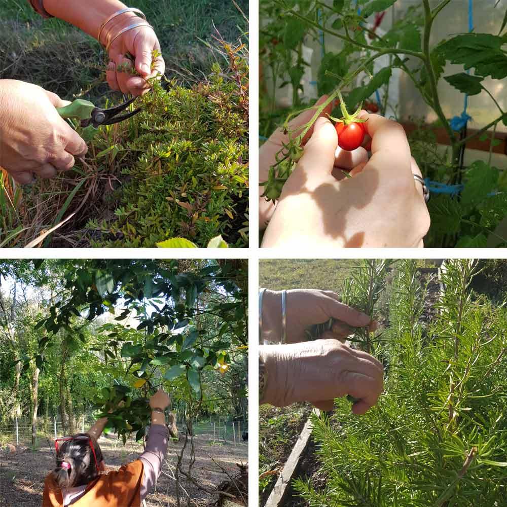 cueillette d'herbes et fruits
