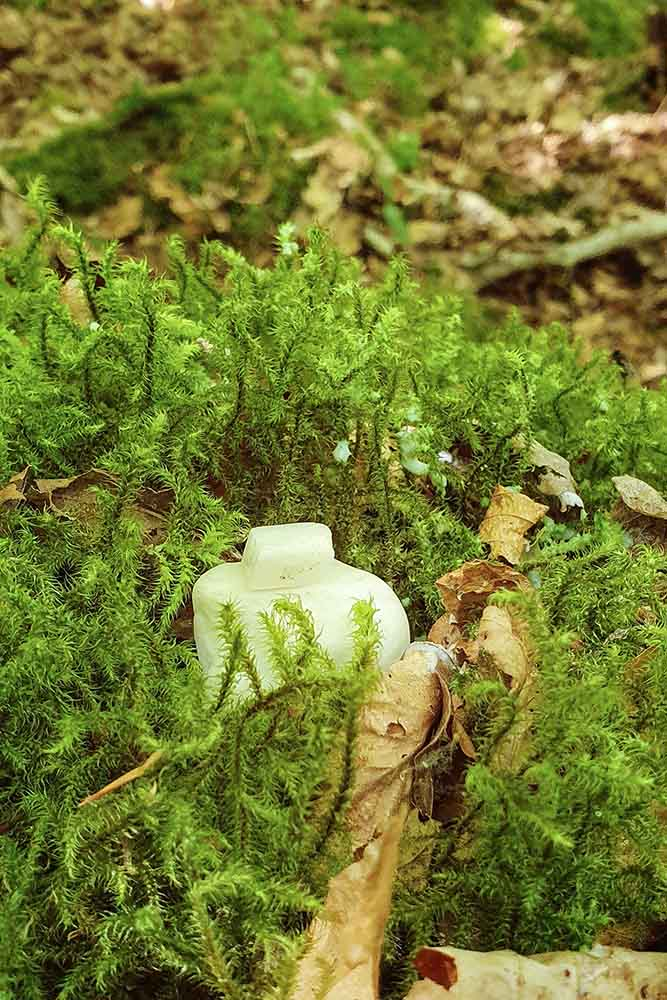 Parmis les célébrations druidiques, celle dédiée à Mélia. on voit des petites pierres blanches de la cérémonie druidique, posées sur un tapid de mousse.