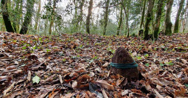 Dans les bois, une pierre de granit entourée d'un cordon vert dédiée à Mélusine est plantée dans la terre recouverte de feuilles mortes