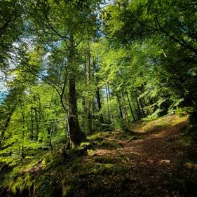 balades druidiques en huelgoat au coeur d'une belle forêt