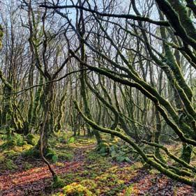 On voit un bois magnifique du pays de Neved pour une belle balade druidique